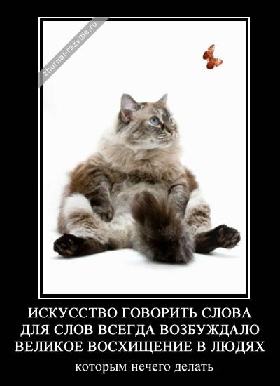 Демотиваторы с котами от zhurnal razvitie ru