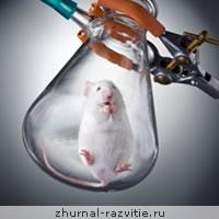 Психологические эксперименты над животными