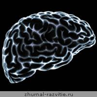 Развитие мозга человека