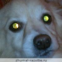 Психология собак